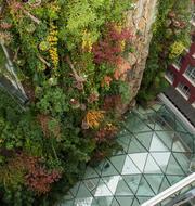 Jardin colgante-56870jpeg